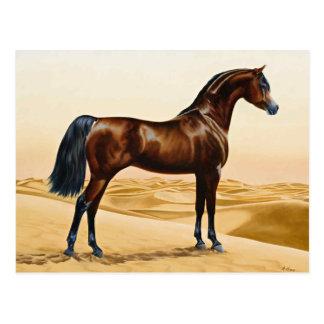 Bay Arabian Stallion Postcard