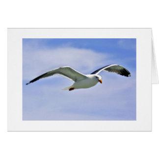 Bay Bird Greeting Card