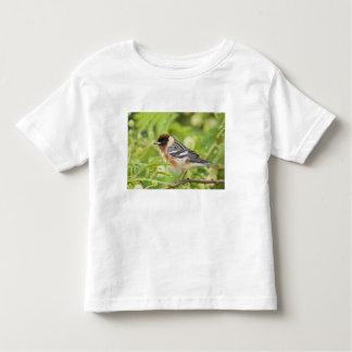 Bay-breasted Warbler (Dendroica castanea) adult Toddler T-shirt