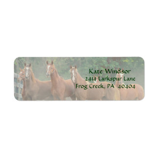 Bay Chestnut Brown Horses in Field with Trees Label