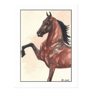 Bay Harness Pony 1 Postcard