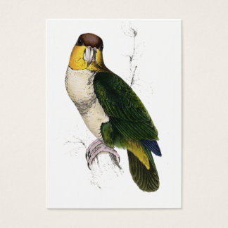 Bay-Headed Parrot by Edward Lear Business Card