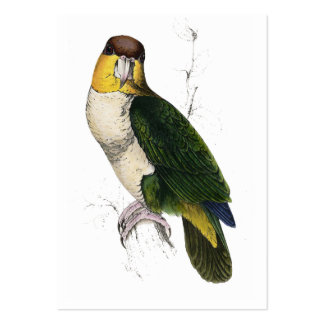 Bay-Headed Parrot by Edward Lear Large Business Card