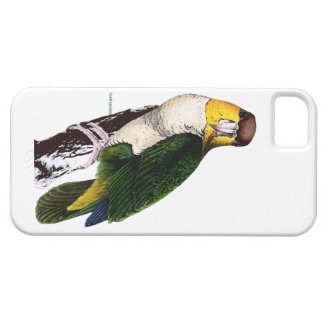 Bay-headed parrot image by Edward Lear iPhone case