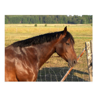 Bay Horse and Fence Post Cards