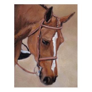 Bay Horse Animal Art Postcard