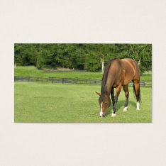 Bay Horse Business Card at Zazzle
