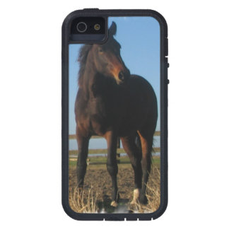 Bay Horse iPhone 5 Cases