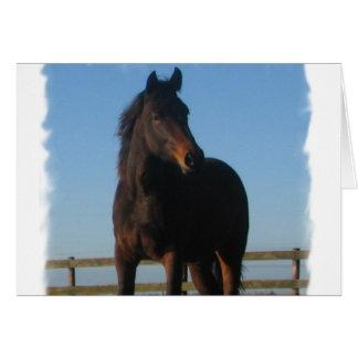 Bay Horse Greeting Card