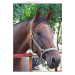bay Horse Greeting Cards
