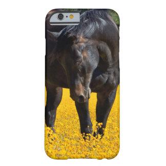 Bay Horse in a Field of Yellow Flowers Barely There iPhone 6 Case