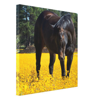 Bay Horse in a Field of Yellow Flowers Stretched Canvas Prints