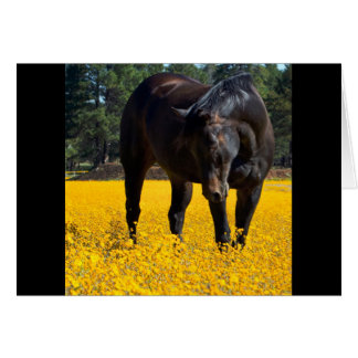 Bay Horse in a Field of Yellow Flowers Cards