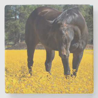Bay Horse in a Field of Yellow Flowers Stone Coaster