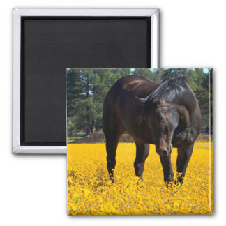 Bay Horse in a Field of Yellow Flowers Magnet