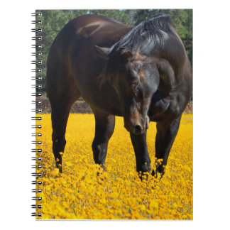 Bay Horse in a Field of Yellow Flowers Notebook