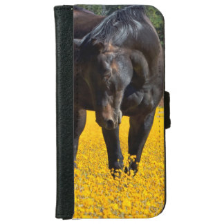 Bay Horse in a Field of Yellow Flowers iPhone 6 Wallet Case