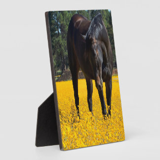 Bay Horse in a Field of Yellow Flowers Plaques