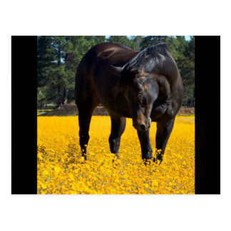 Bay Horse in a Field of Yellow Flowers Postcard