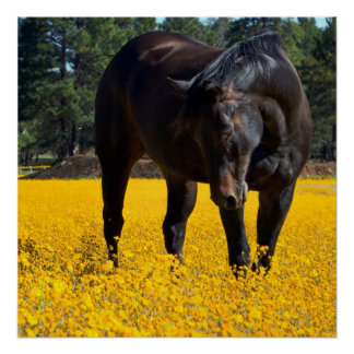 Bay Horse in a Field of Yellow Flowers Posters