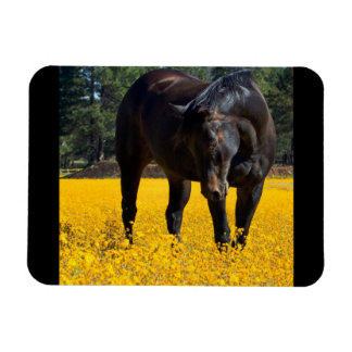Bay Horse in a Field of Yellow Flowers Rectangle Magnets