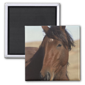 Bay Horse in Wind 2 Inch Square Magnet
