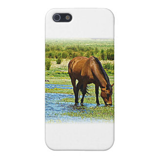 Bay Horse iPhone 5 Cover