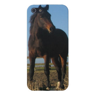 Bay Horse Cover For iPhone 5