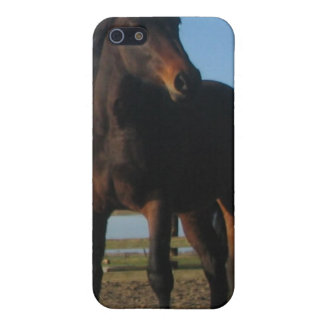 Bay Horse iPhone Case iPhone 5 Case