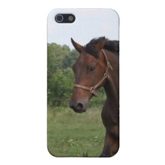 Bay Horse iPhone Case iPhone 5 Cases