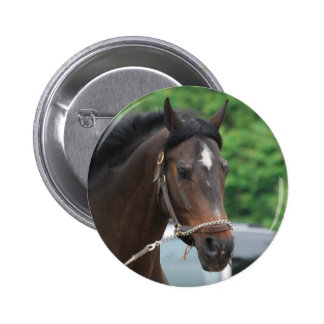 Bay Horse Lunging Button