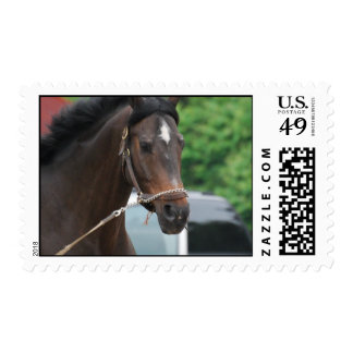 Bay Horse Lunging Postage Stamp