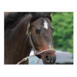 Bay Horse Lunging Postcard