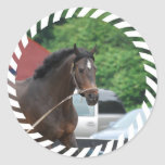 Bay Horse Lunging Sticker