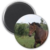 Bay Horse Magnet