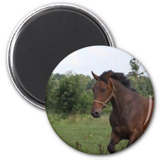 Bay Horse Magnet Refrigerator Magnets