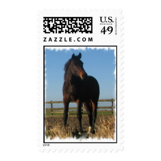 Bay Horse on a Stamp