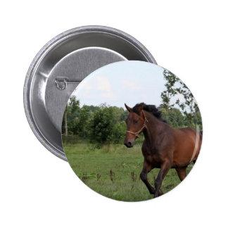 Bay Horse Pin