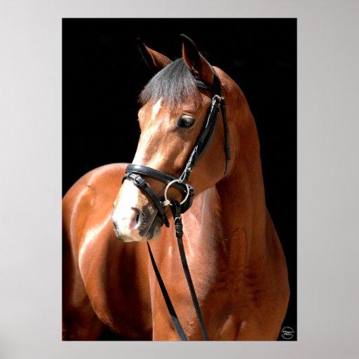 Bay Horse Portrait Poster