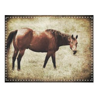 Bay Horse Postcard