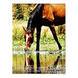 "Bay Horse ""Reflections"" Postcard"