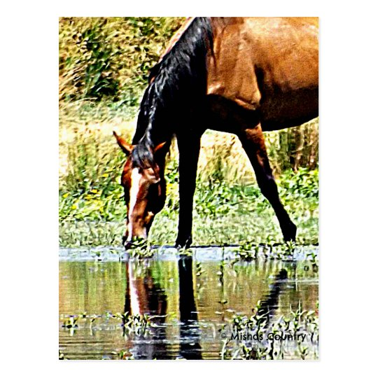 "Bay Horse ""Reflections"" Postcard"