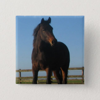 Bay Horse Square Pin