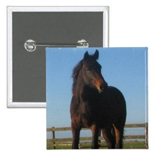 Bay Horse Square Pin