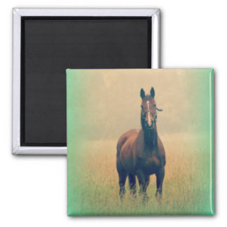 Bay Horse Standing in a Field Magnet