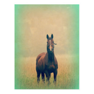 Bay Horse Standing in a Field Postcard