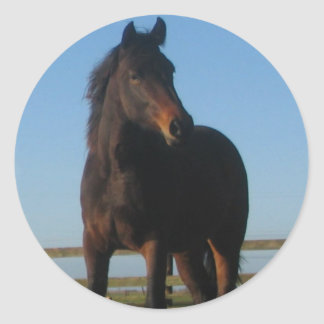 Bay Horse Sticker