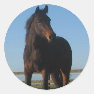Bay Horse Sticker