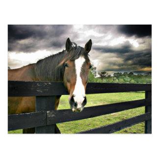 Bay horse storm postcard