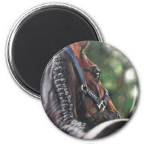 Bay Horse Thoroughbred Warmblood Dressage Jumper Magnet